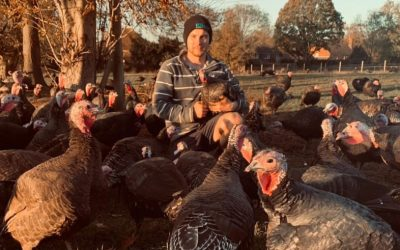 Farmer Focus: Temple Farm Turkeys