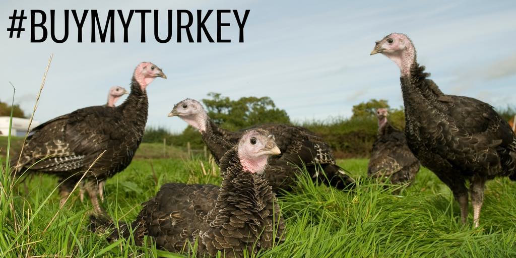Support the NFU #BuyMyTurkey social media day – Friday 7th December