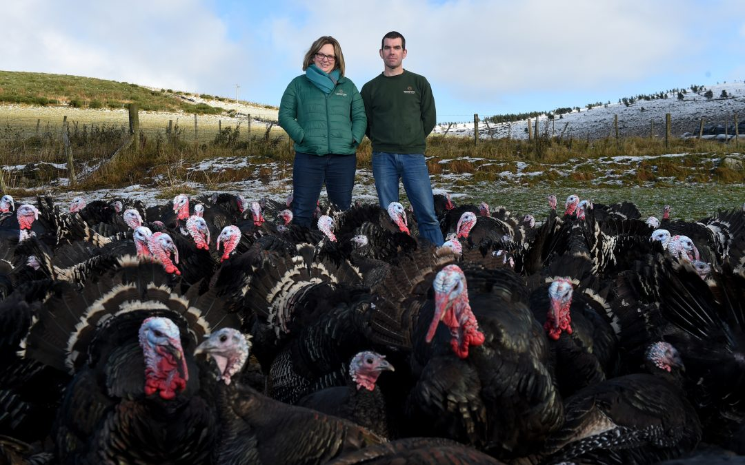 Farmer Focus: Ledmacoy Turkeys