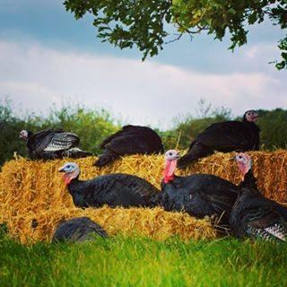 Godwick Farm Christmas Freerange Turkey