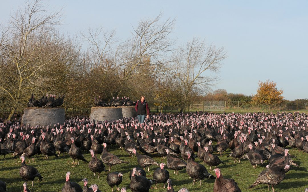 Farmer Focus – Great Grove Poultry