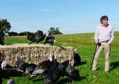 Tollgate Farm Poultry