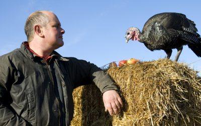 Farmer Focus – Holme Farm Turkeys